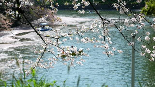 桜の季節 - 伝統行事点の映像素材/bロール
