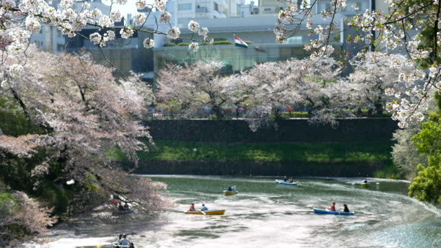 cherry blossoms season - coiled spring stock videos and b-roll footage