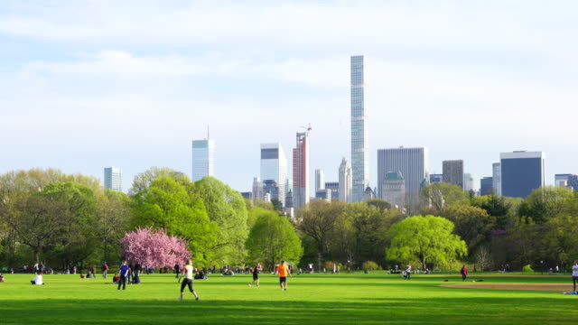 cherry blossoms trees stand among the fresh green trees on the great lawn in central park new york. manhattan skyscrapers can be seen behind. - great lawn stock videos and b-roll footage