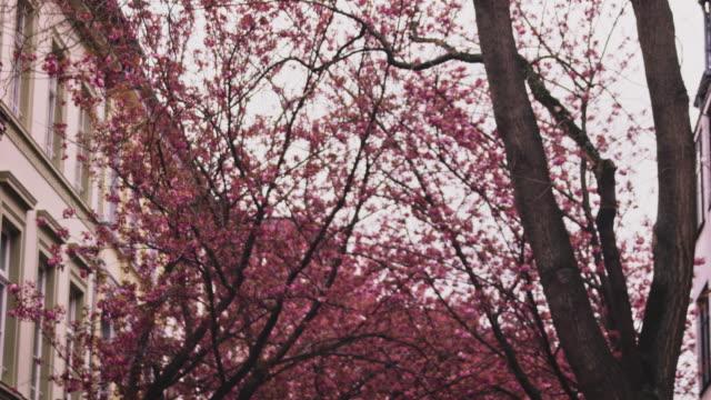 桜 - 四月点の映像素材/bロール
