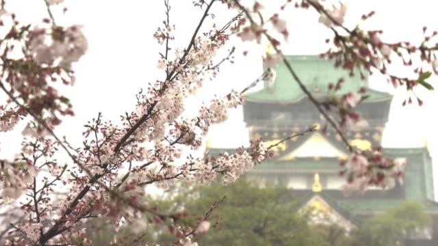 Cherry Blossoms With Osaka Castle In Rain, Osaka, Japan