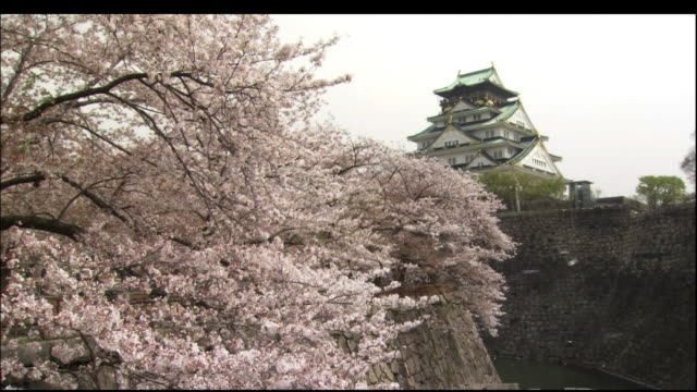 cherry blosssoms and osaka castle - 城点の映像素材/bロール