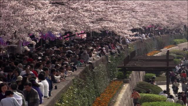 Cherry Blosssoms