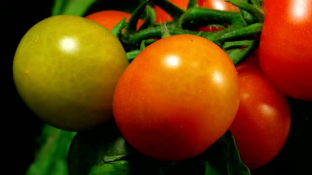 cherry tomatos ripen - ripe stock videos & royalty-free footage