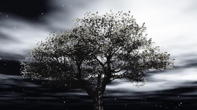 チェリーツリーの夜景 - 一つ点の映像素材/bロール