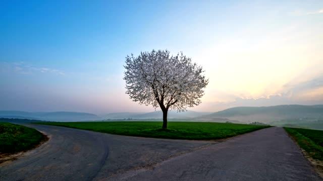 stockvideo's en b-roll-footage met cherry tree at sunrise with forked road in spring, bavaria, germany - vork