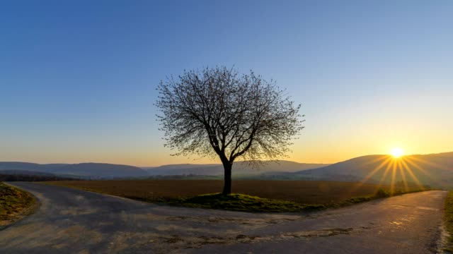 cherry tree at sunrise with forked road in spring, spessart, bavaria, germany - richtung stock-videos und b-roll-filmmaterial