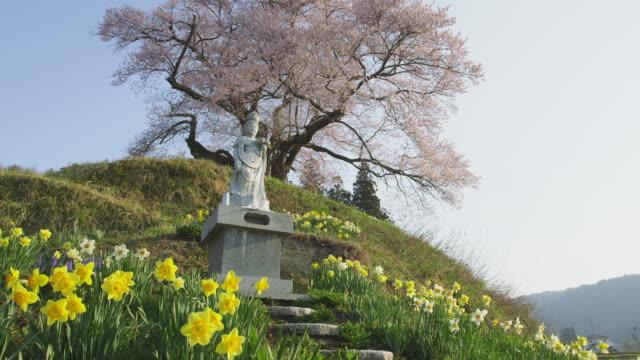 Cherry tree in Hocchi in Gunma Prefecture, Japan
