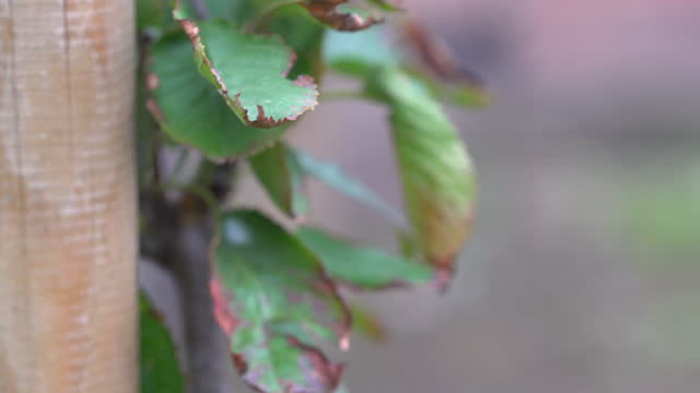 cherry tree leaves - annick vanderschelden stock videos & royalty-free footage