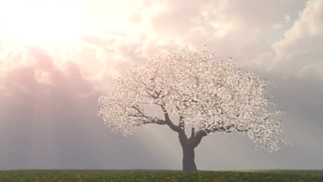 stockvideo's en b-roll-footage met cherry tree with rays of light - enkel object