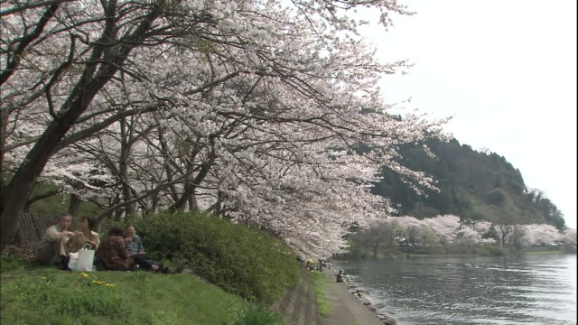 Cherry trees along the lakeside.