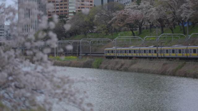 Cherry Trees Alongside Moat, Tokyo