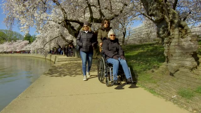 cherry trees are in full bloom as visitors enjoy cherry blossoms at the tidal basin april 1 2019 in washington dc the national park service said this... - natural parkland stock videos and b-roll footage