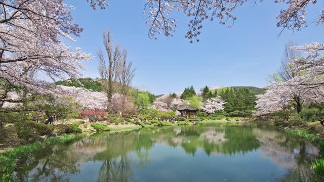 cherry trees at bomunjeong pavilion in bomun tourist complex / gyeongju-si, gyeongsangbuk-do, south korea - pond stock videos & royalty-free footage