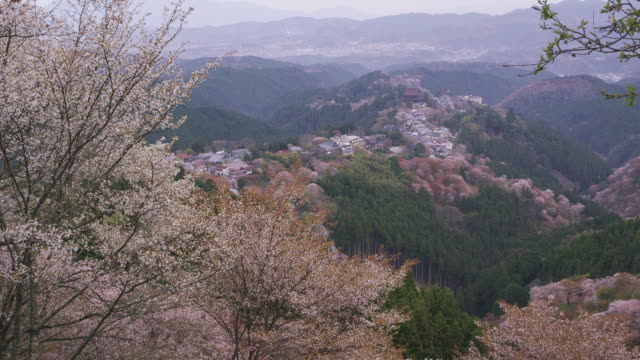 cherry trees at mt. yoshino - nara prefecture stock videos and b-roll footage