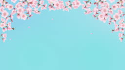 Cherry trees in full bloom and spring breeze. Cherry blossom arch (blue sky background)