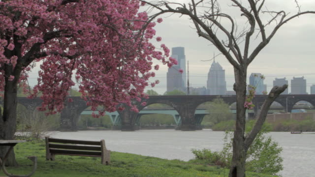 ha cherry-blossom tree in park near bridged schuylkill river / philadelphia, pennsylvania, united states - bench stock videos and b-roll footage