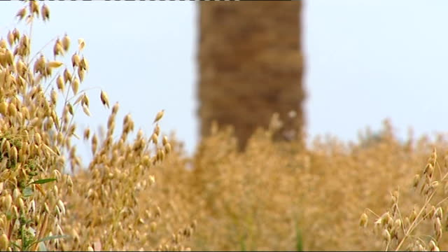 nantwich: ext panning shots across crop field to replica of big ben tower and clock low angle shot of tower zoom in to clock - ナントウィッチ点の映像素材/bロール