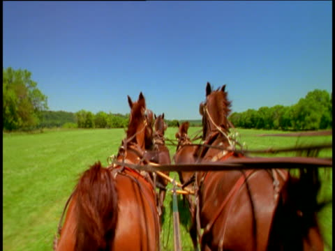 chestnut brown horses pulling cart gallop through lush green pastures towards blue sky - galopp gangart von tieren stock-videos und b-roll-filmmaterial