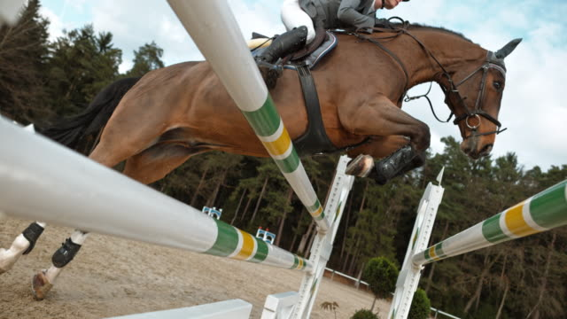 SLO MO Chestnut horse and his rider jumping over an oxer