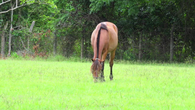 chestnut horse in a cuban farm during the daytime - animal markings stock videos & royalty-free footage