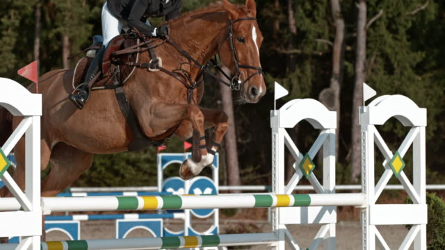 SLO MO Chestnut horse jumping over an oxer in sunshine