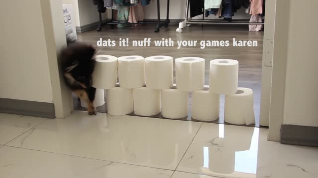 chestnut jumps for his life will he finish all the levels or will he be a sore pupper - tissue paper stock videos & royalty-free footage