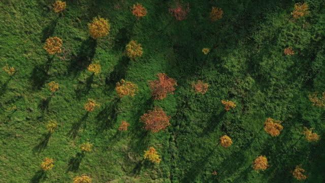 chestnut plantation, autumn, soba valley, valles pasiegos, cantabria, spain, europe - soba stock videos & royalty-free footage
