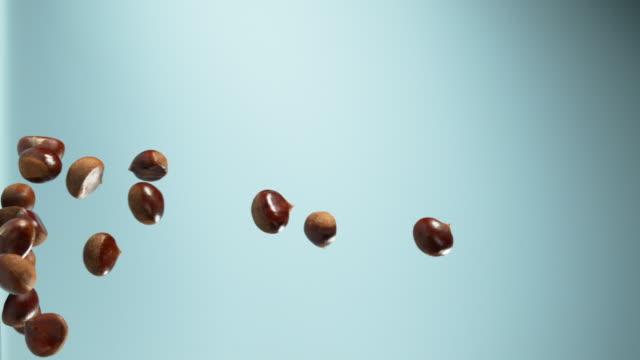vidéos et rushes de chestnuts flying - marron couleur