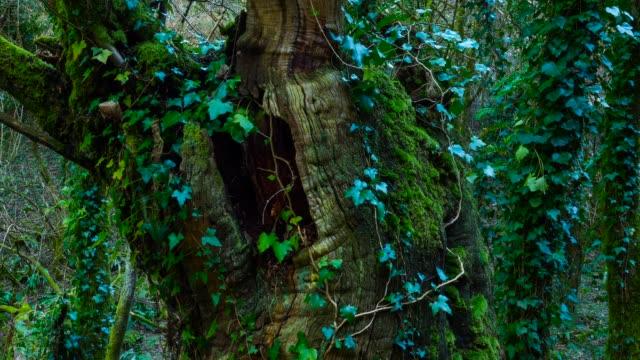 chestsnut forest in arrikrutz cave - コケ点の映像素材/bロール
