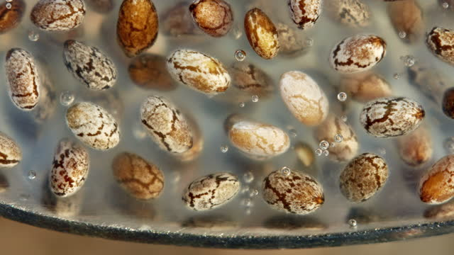 chia seeds are much easier to digest and much more effective if soaked for a few hours before consumption - potassium stock videos & royalty-free footage