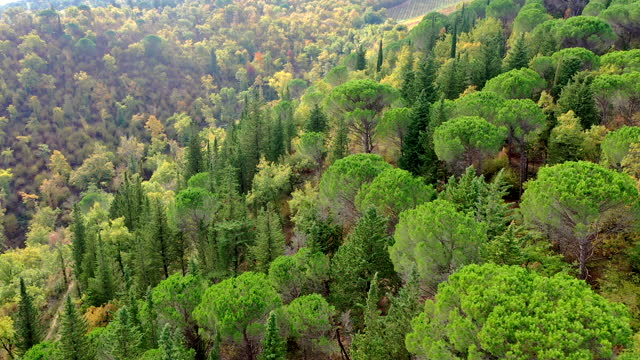 chianti region forest in autumn, tuscany, italy - pinaceae stock videos & royalty-free footage