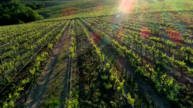 chianti wine region, tuscany, italy - italian culture stock videos & royalty-free footage