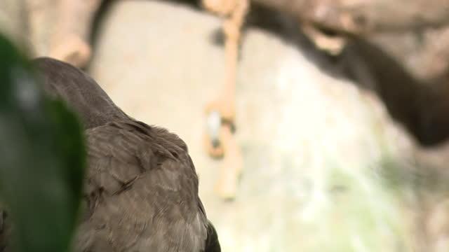 vídeos y material grabado en eventos de stock de chicago, il, u.s. - big bird hiding between leaves at lincoln park zoo, reopened after months of closure due to covid-19 pandemic. lincoln park zoo... - zoológico de lincoln park