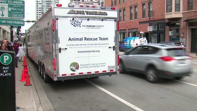 wgn chicago il us cats and dogs displaced by hurricane dorian arrive in chicago in anticruelty society truck on thursday september 5 2019 - gabbietta per animali video stock e b–roll