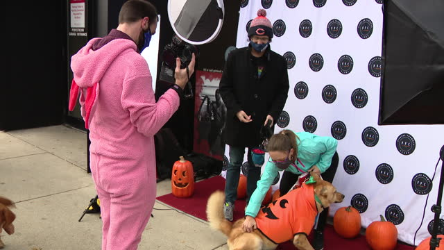 chicago, il, u.s. - dogs in halloween costumes posing for pictures at lake view halloween pupcrawl event on saturday, october 24, 2020. - pet owner stock videos & royalty-free footage
