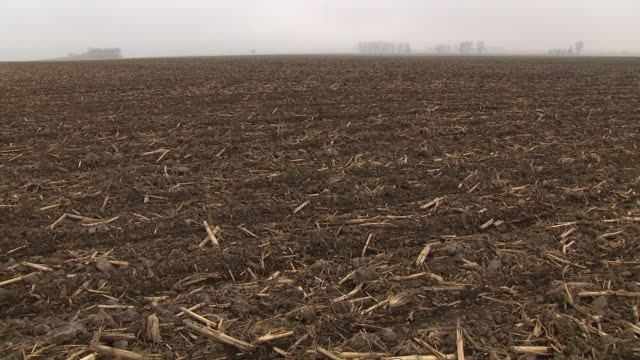 wgn chicago il us empty stubble field in fog on thursday april 23 2020 - stubble stock videos & royalty-free footage