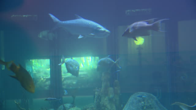 chicago, il, u.s. - fish swimming in fish tank at shedd aquarium as it reopens after closing due to covid-19 on friday, july 3, 2020. - shedd aquarium stock videos & royalty-free footage