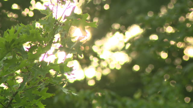 chicago, il, u.s. - green trees in sunlight at park in chicago on summer day, on saturday, july 18, 2020. - lens flare stock videos & royalty-free footage