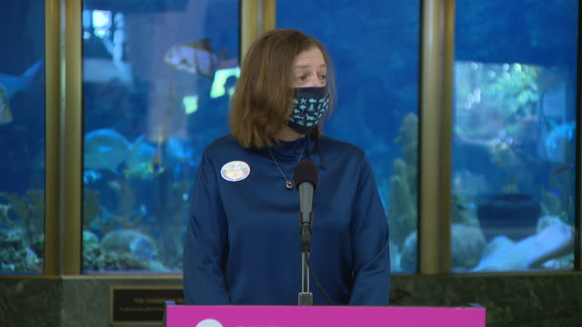 chicago, il, u.s. - masked employee speaking about animal experience during closure as shedd aquarium reopens after closing due to covid-19 on... - shedd aquarium stock videos & royalty-free footage
