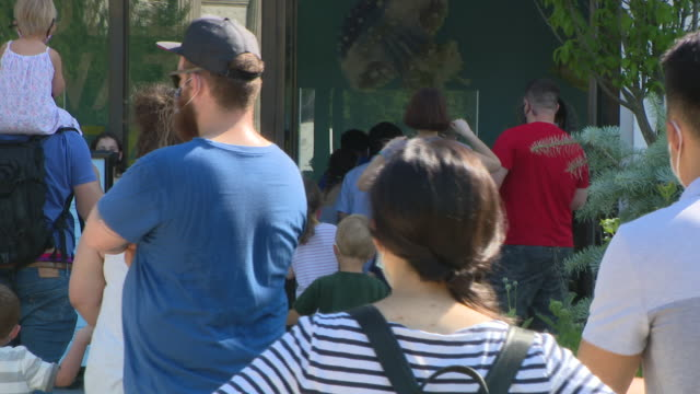 chicago, il, u.s. - masked visitors walking around, waiting in lines at shedd aquarium as it reopens after closing due to covid-19 on friday, july 3,... - shedd aquarium stock videos & royalty-free footage