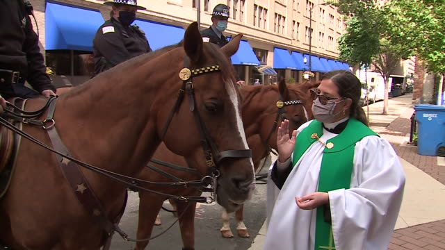 chicago, il, u.s. - mounted police attend an outdoor animal blessing hosted by the archdiocese of chicago on saturday, october 3, 2020. sunday,... - hooved animal stock videos & royalty-free footage