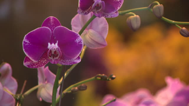 chicago, il, u.s. - orchids for sale displayed at green flower shop in chicago on tuesday, november 10, 2020. - flower head stock videos & royalty-free footage