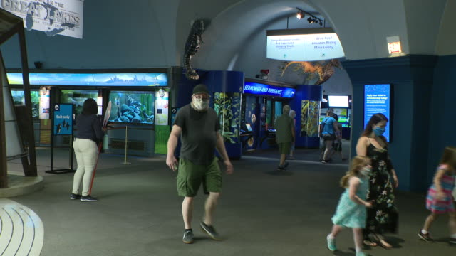 chicago, il, u.s. - people in protective face masks visiting shedd aquarium as it reopens after closing due to covid-19 on friday, july 3, 2020. - shedd aquarium stock videos & royalty-free footage