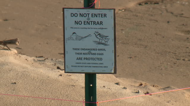 wgn chicago il us protected area for endangered bird piping plovers on chicago's montrose beach conservationists want the mamby on the beach twoday... - animals in the wild stock videos & royalty-free footage