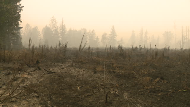 stockvideo's en b-roll-footage met chicago, il, u.s. - rural landscape damaged by oregon wildfires in linn county, oregon on tuesday, september 15, 2020. fires continue to burn tuesday... - oregon amerikaanse staat