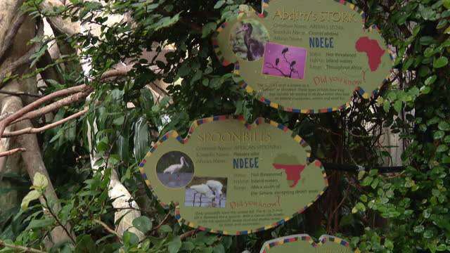 vídeos y material grabado en eventos de stock de chicago, il, u.s. - signage in front of spoonbill area at lincoln park zoo, reopened after months of closure due to covid-19 pandemic. lincoln park... - zoológico de lincoln park