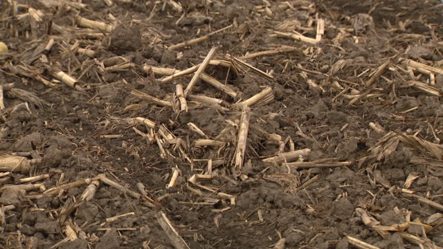 wgn chicago il us views of field stubble on thursday april 23 2020 - stubble stock videos & royalty-free footage