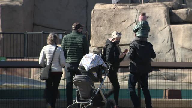 vídeos y material grabado en eventos de stock de chicago, il, u.s. - visitors in face masks at lincoln park zoo, reopened after months of closure due to covid-19 pandemic. lincoln park zoo reopened... - zoológico de lincoln park