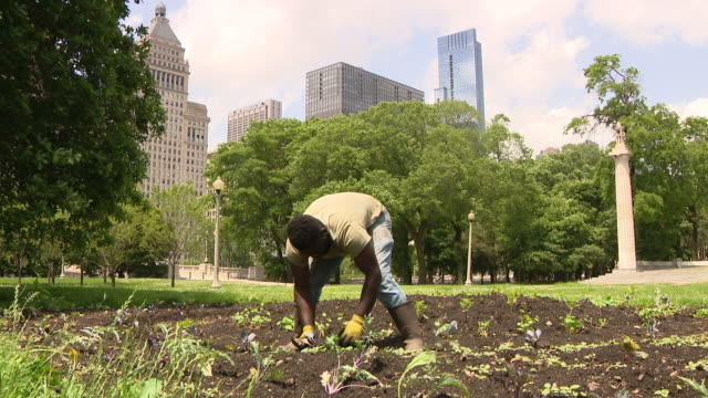 "wgn chicago il us volunteers working in urban garden on thursday june 11 grant park's ""art on the farm"" a ""landscaped"" urban farm teens are trained... - simple living stock videos & royalty-free footage"